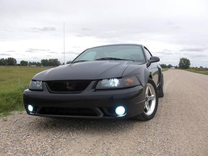2001 ford mustang svt cobra coupe for sale in saskatoon. Black Bedroom Furniture Sets. Home Design Ideas